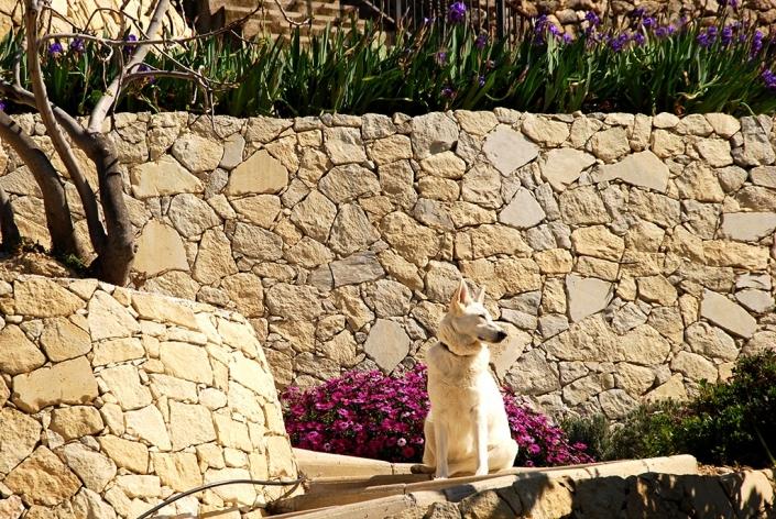 Gardens, Almassera