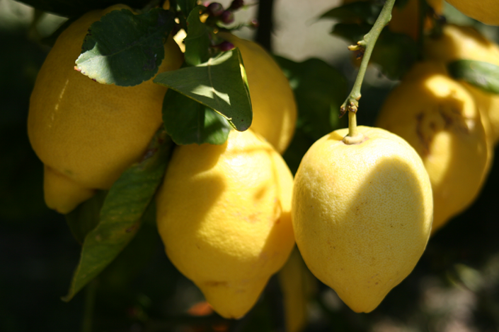 Lemons, Valero
