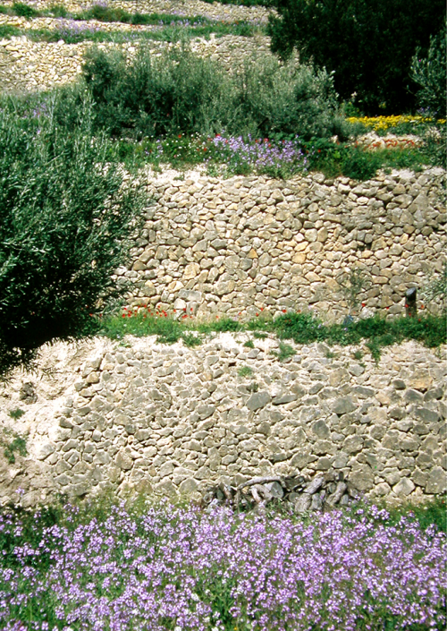 The Almàssera Vella