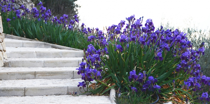 Iris and steps