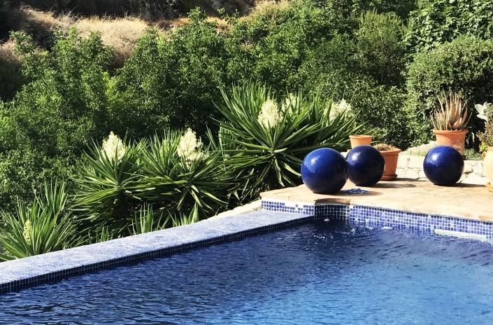 Pool and yucca